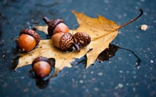Acorn as a symbol of wealth